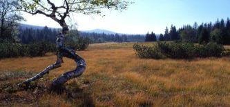 Nationalpark Böhmerwald - mit Pedal, Paddel und Wanderschuhen