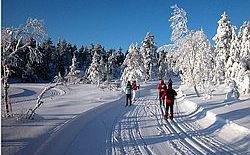 Schweden Silvester in Schweden feiern: Ferienhausanlage Gammelbyn
