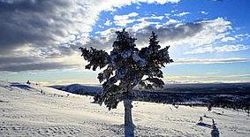 Schweden Skilanglaufen in Schweden: Hüttentour in Idre