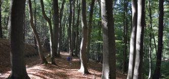 Wanderstudienreise Vulkanpark Osteifel