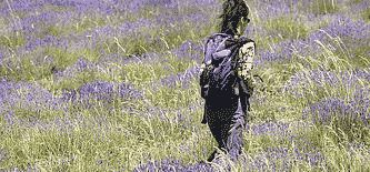 Frankreich Individuelle Provence-Wanderreisen