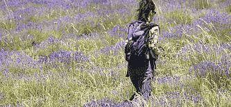 Individuelle Provence-Wanderreisen